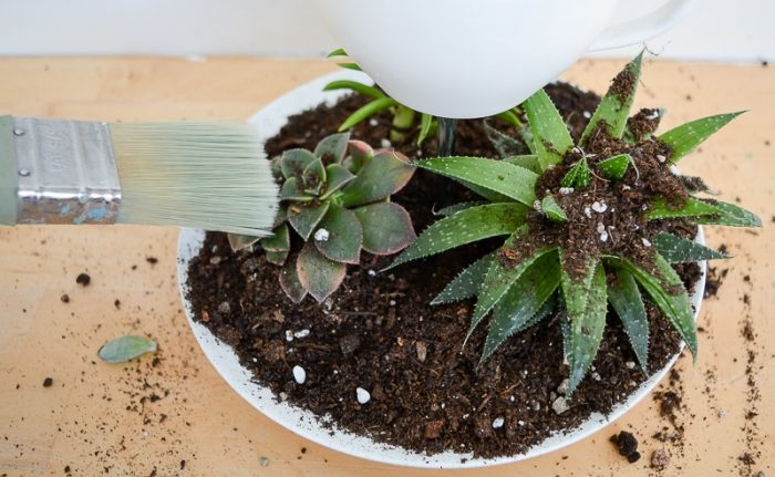 Succulent Planter DIY 20